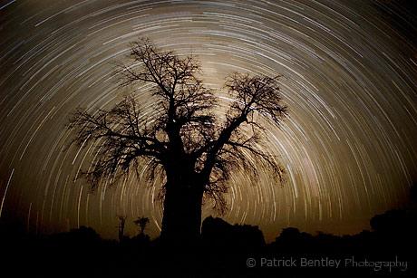 stack_baobab_web_bg